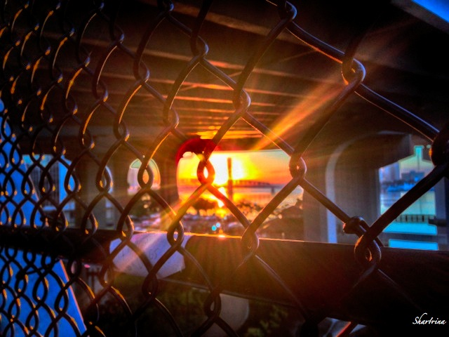 iron fence_HDR